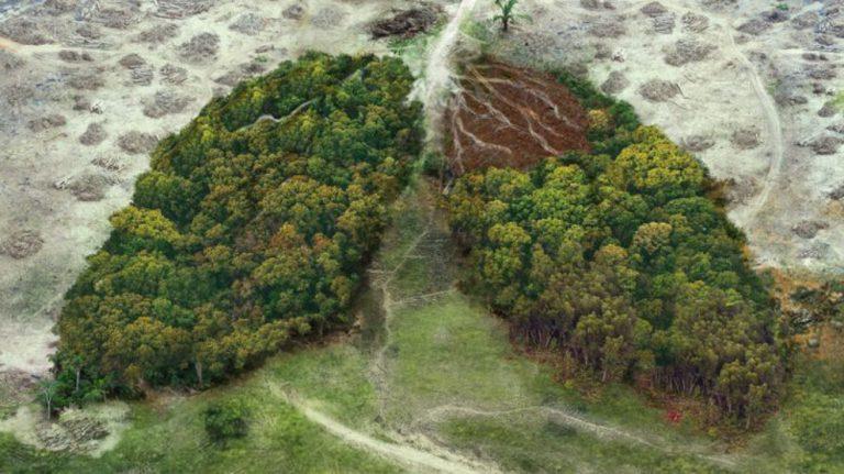 14 yılda 43 milyon hektar orman yok oldu